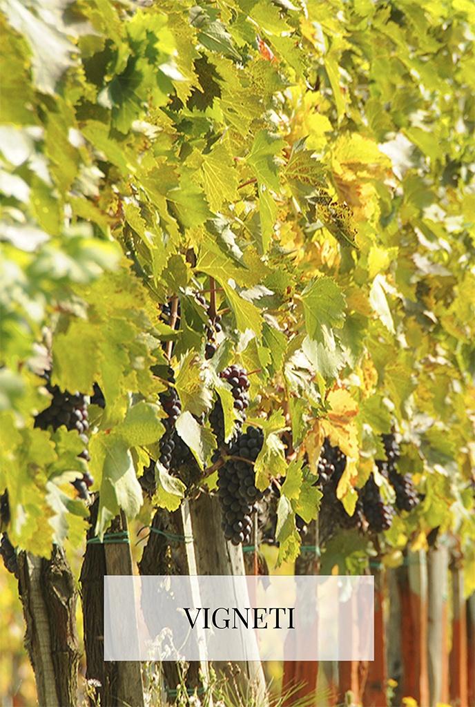 vineas Ercolani